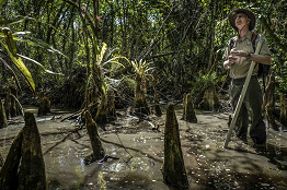 Photo du documentaire SwampScapes
